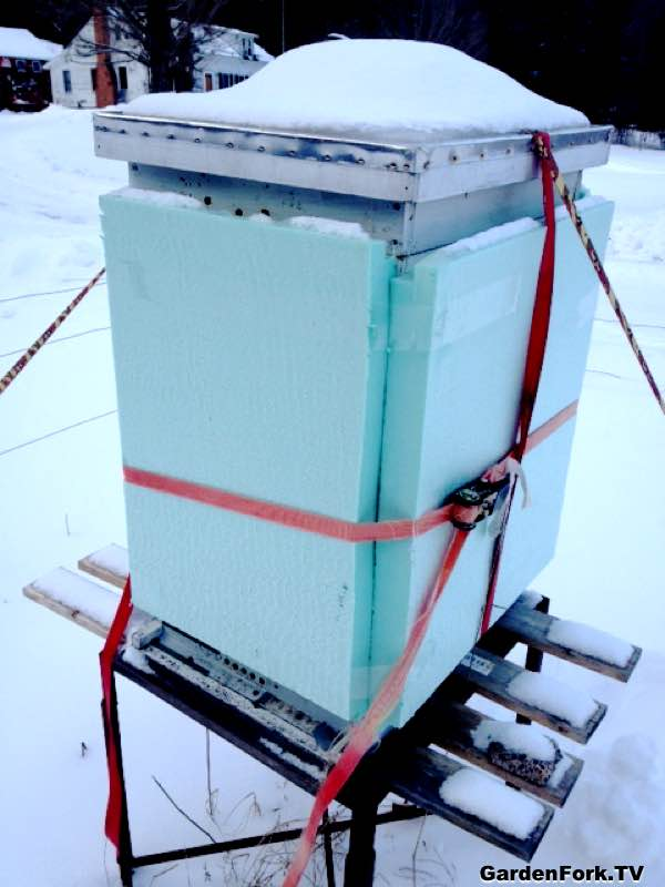 Will My Bees Survive Winter