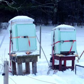 bees survive winter
