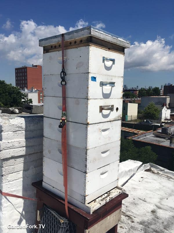 Hive Top Vent Board