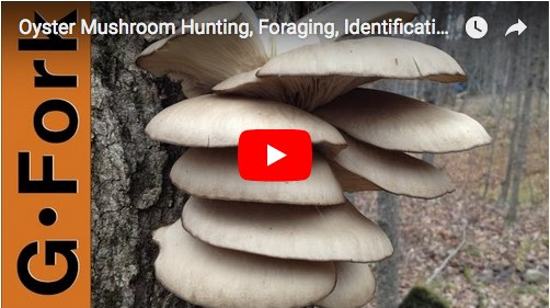 Mushroom identification video