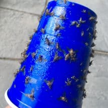how to get rid of deer flies
