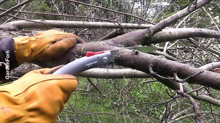pruning tree in fall