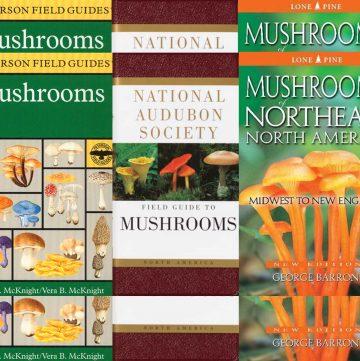 mushroom identification books