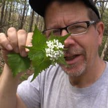invasive garlic mustard plant